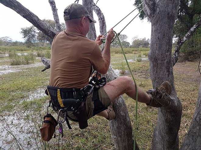 Training rangers in Zimbabwe   into trees